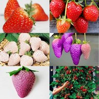 Wholesale 8 kinds Strawberry Seeds Kind Total Green Purple Rose White Black Red BLUE Climbing Strawberry Seeds HY1159
