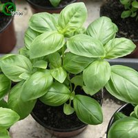 basil bags - Sweet basil Seeds Bonsai Flower Seeds Potted Plants Flowers Particles Bag E017