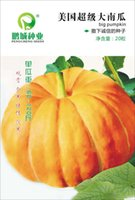 big pumpkin seeds - Vegetable seeds The super big pumpkin seeds per catties Giant pumpkin Edible grains