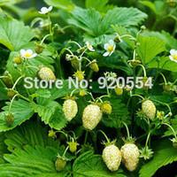 Cheap Hot selling 50pcs lot Strawberry, Alpine Yellow seed bonsai plant DIY home garden free shipping