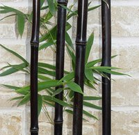 Wholesale 50 seeds bag rare BLACK BAMBOO SEEDS Phyllostachys Nigra Dendrocalamus asper Betung Hitam Black culmed rough bamboo seeds