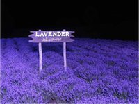 Wholesale Beautiful Lavender Seeds Natural Aroma Herb Plants Balcony Bonsai Lavener Seeds Flower Seeds gifts for gardening fans