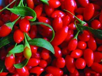 berry drinks - The largest wild Chinese wolfberry Top Goji Berries Pure Bulk Bag Certified ORGANIC Green food wolfberry goji berry goji tea drinking