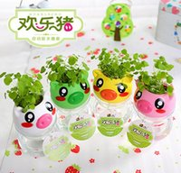 Wholesale Automatic Suction Gift Happy Pig Cute Hair Plant Bonsai Grass Doll Office Mini Plants Fantastic Couples Home Decor Ceramic Pots and Seeds