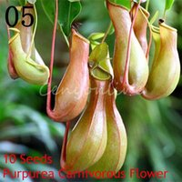Wholesale 10Pcs Bag PURPLE PITCHER PLANT Sarracenia Purpurea CARNIVOROUS Flower Seeds Purify the Air Catch Insect