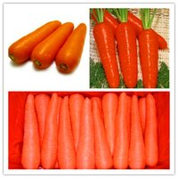 Wholesale 300 bag Five inches ginseng carrot seeds carrot seed potted fruit vegetable seeds for home garden planting sementes