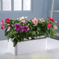 Wholesale Mini Smart Garden High Quality Table Sill Balcony Garden Planters Auto suction Water Pots Clear Soilless Culture Tomato Fruit Flower Pot