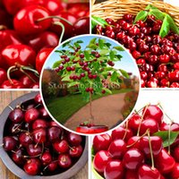 Cheap Fruit seeds 30pcs Cherry Seeds Tree Seeds Bonsai Tree Seeds, Home Garden Potted Plant DIY Home Garden decoration AA