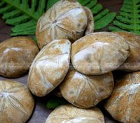 art biscuit - 1Pc Natural Petrified Fossil Sand Dollar Sea Biscuit Urchin Reiki Stone F428