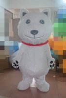 bear express - Express it in white bear mascot costume for adults