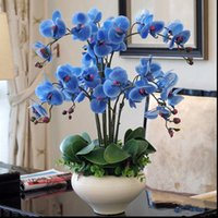 Wholesale Pack Phalaenopsis Seeds Rare Beautiful Bonsai Flower Seeds Popular Flower Four Seasons Orchid