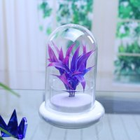 Wholesale handmade orosilicate glass dome cover with glass base Creative Fashion Microlandschaft Bottle Glass Vase for home decoration