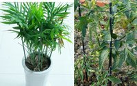 Wholesale Metal Garden Trellis Plant Grow Through Supports Waterproof Plastic Coated Durable Easily Assembled DHL