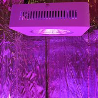 Wholesale Hot w Reflector COB Full Spectrum Led Grow Lights LED Horticulture Lighting for Medicinal Plants Veg and Flowering