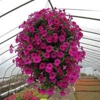 Wholesale Hanging Petumia Hybrida Flower Seeds Light up Your Garden Perennial Herbs Very Beautiful