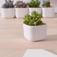 ceramic flower pots - Delicate Generous And Simple White Ceramic Creative Mini Desktop Small Fleshy Square Zakka Classic Flower Pot