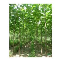 Wholesale New forest tree seeds paulownia seed seeds pack