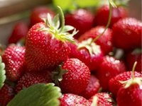 balcony pot - 2016 Hot Sale Strawberry seeds of fruits and vegetables four seasons flower seed indoor potted balcony easy kind of courtyard strawberry