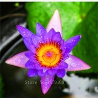 aquatic plants - ACRED BLUE LOTUS SEEDS Nymphaea Caerulea WATER LILY AQUATIC PLANT SEEDS NEW garden decoration plant F131