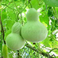 Wholesale 20 Big Spoon Bottle gourd Seeds Vegetable Seeds Flower Seasons Can Be Sown