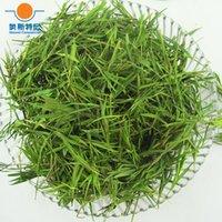bamboo leaf tea - organic Chinese herb tea dried bamboo leaf tea