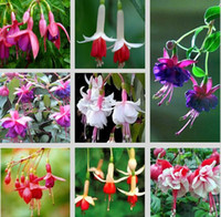 begonia mix - Fuchsias seeds potted flowers DIY Planting flowers bell flower lantern Begonia Mixed color seeds bag
