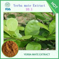 Wholesale 100 natural Yerba mate extract Tea reduce diabetes and blood sugar weight loss increase energy improve mood improve sleep tea