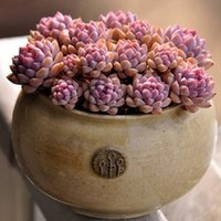 Wholesale Planters Mix Succulents Seeds Lotus Lithops Pseudotruncatella Bonsai Plants Seeds For Home Garden Seeds Bag
