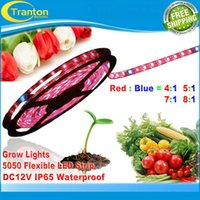 Wholesale DC12V m growing LED Strip grow light Red Blue for greenhouse Hydroponic plant m