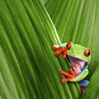 Wholesale 180x200cm Frog Lovely Animal Shower Curtain Bathroom Waterproof Fabric
