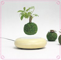 Wholesale 1 dhl magnetic levitating air plant bonsai display stands with wooden base