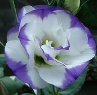 Семена цветущие Цены-Петуния Hybrida Семена Four Seasons весной и осеннего сева Терраса цветочный горшок Семена 10PCS / ПАК