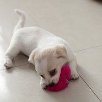 Wholesale Pet Supplies Pet Dog Toy Ball Funny Dog Cat Hair Stick Toy Puppie Stoys Plaything Keychian Bag Phone