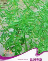 aromatic grass - Summer Savory Seeds Satureia Hortensis Vernal Grass Aromatic Plants D034