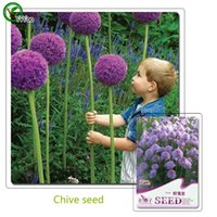 annual garden plants - Chive Seeds Bonsai Seeds Garden Plants Flower Seeds Annual Herb Particles U015