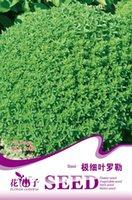 basil grow - Flower Ocimun gralissimum Seeds Original Package Garden bonsai Flower seeds Easy Grow Basil bags per