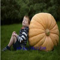 atlantic giant seeds - seeds pack Atlantic Giant Pumpkin Seeds vegetable seeds