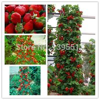 Wholesale 600 Red giant Climbing Strawberry Seeds Fruit Seeds For Home Garden DIY rare seeds for bonsai