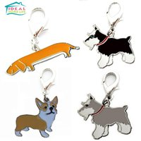 Wholesale New Zinc Alloy Random Color Schnauzer Pet Dog Tag Pet Accessories Collar Necklace Pendant Tag Keychain