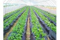 Cheap Wholesale-Free shipping,heats the soil.kills weeds.black,2x10M 1 silk,Garden PE film greenhouse plastic mulch.plastico para invernadero