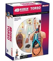 anatomy mannequin - 4D Master mannequins doctor anatomy teaching equipment Educational toy Medical supplies body model