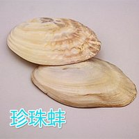 aquarium crafts - Special offer natural conch shell craft freshwater pearl mussel aquarium aquarium design decorative single board