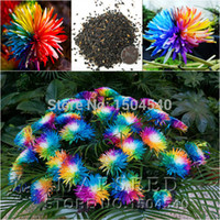 Wholesale 100 Rainbow Chrysanthemum Flower Seeds rare color new arrival DIY Home Garden flower plant