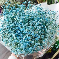 Wholesale Starry flower seeds in spring and winter seasons kinds of packages indoor potted plant seeds easy to live seeds