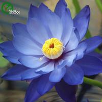 Голубые лилии RU-Семена цветов семена лотоса Blue Water Особенности лилии / вода / пруды Растения сад завод 10шт A005