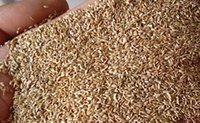 bermuda grass seed - 30000pcs a Set Bermuda Grass Seed rare Home Garden Diy Reasonable Choice For You Good Quality