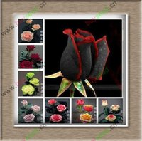 amazingly beautiful - 1 Professional Pack approx Seeds Pack Rare Amazingly Beautiful Black Rose Flower with Red Edge Seedling Seed