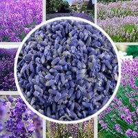 Wholesale Super grad Lavender for Tea g pack Lavender Sachets lavandula pedunculata