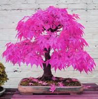 al por mayor árbol bonsai-El envío gratuito 7 variedades diferentes disponibles 20 semillas de arce Bonsái casi no necesitan Cuidado de las plantas de jardín