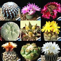 Wholesale 10pcs mixed cactus Echinopsis Ball Cactus Perennial Succulent Plants office Mini plant succulent planting